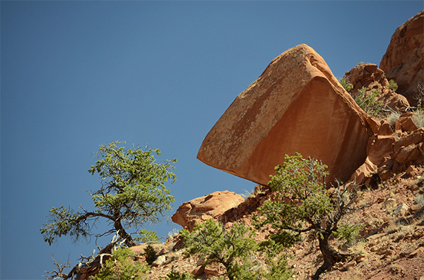 Tree and red rock in balance