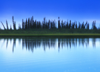 Drunken Forest on Alaskan Island